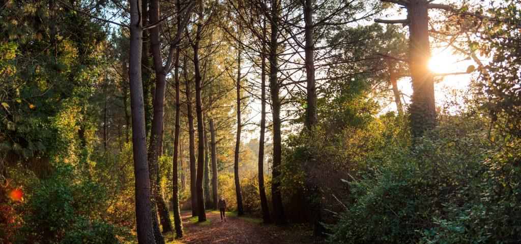 Ambiance hivernale dans la forêt du Pignada ©RIBLANC