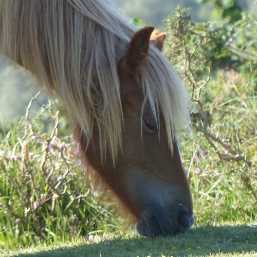 horse-2634001_960_720